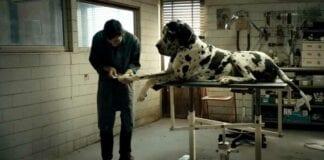 Dogman (2018) Film İncelemesi